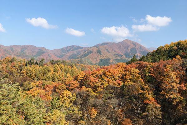 信州高山村の秋の紅葉