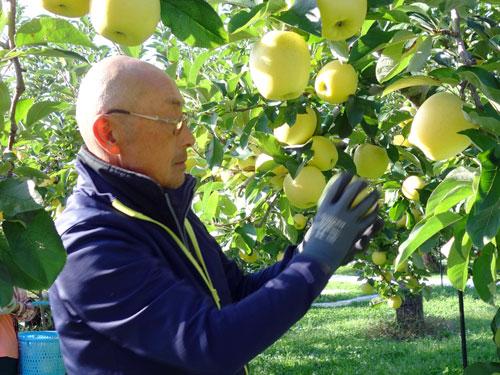 シナノゴールドを手に持つ片桐果樹園メンバー