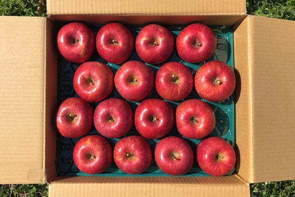 霜降りふじりんごの画像