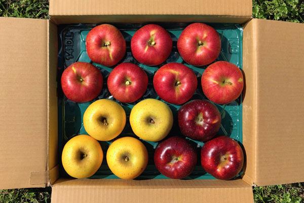 旬の信州りんご詰め合わせの画像